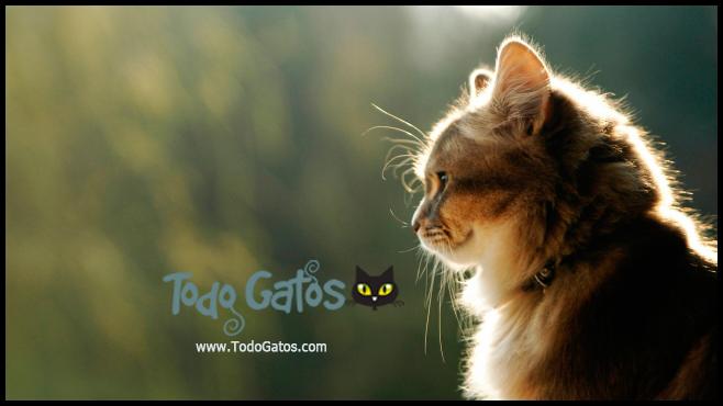 www.todogatos.com